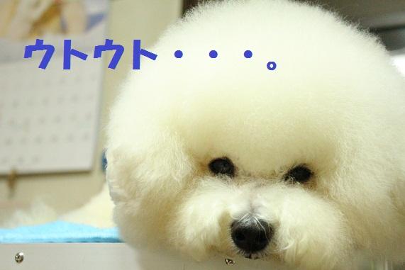 7_20120222022749.jpg