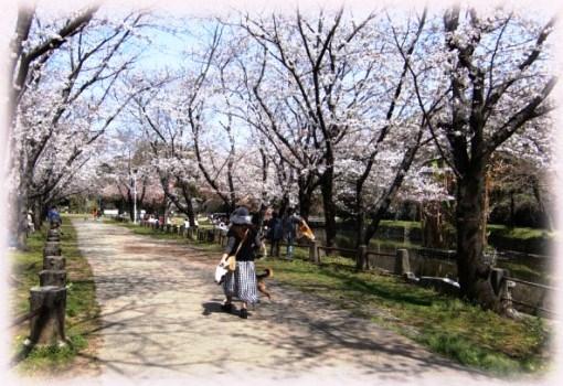 hakemiya-p-4.jpg