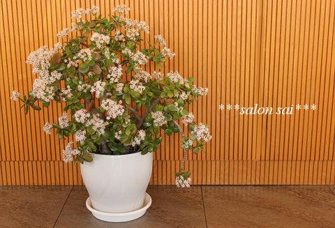 plant5.jpeg