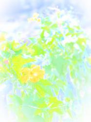 PA074307_convert_20121018003938.jpg