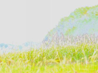 PA074316_convert_20121205000947.jpg