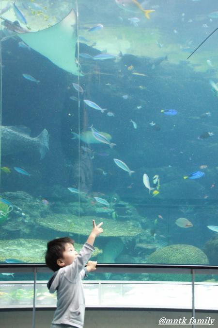 お魚さんいっぱいだぁ~☆