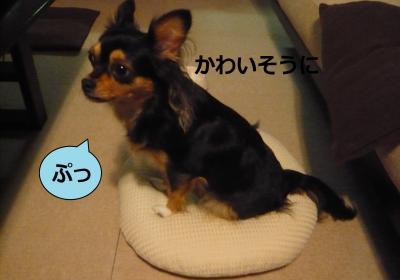 001_convert_20111002231932.jpg
