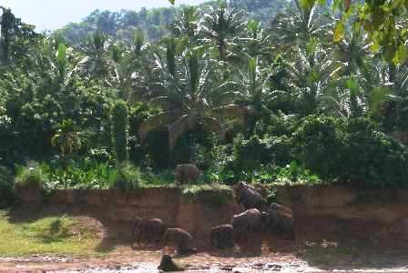 p10030-Kandy_Sri_Lanka-Climbing_to_the_Jungle.jpg