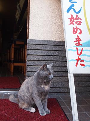 長崎ネコ11