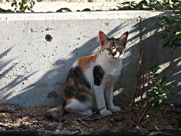 子ネコたち1-3