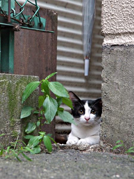 子ネコたち2-1