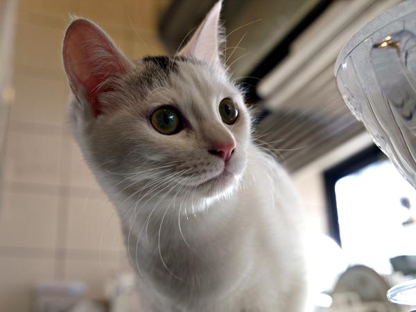 子ネコのアイちゃん6