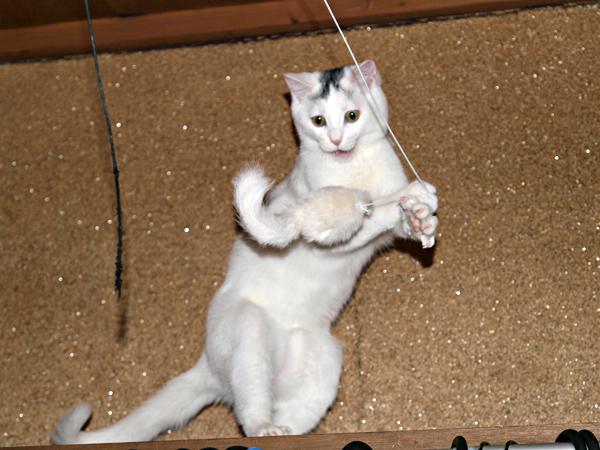 子ネコのアイちゃん5