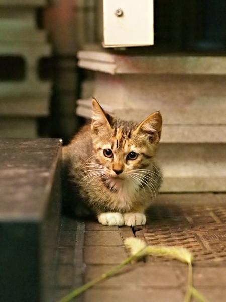 子ネコたち4-5