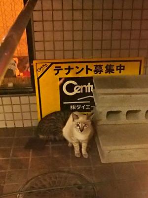 子ネコたち4-1