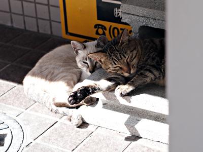 子ネコたち4-2