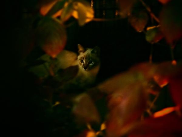 子ネコたち5-4