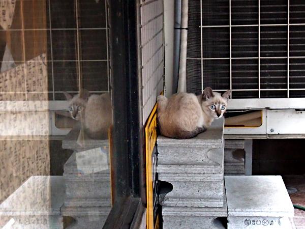 子ネコたち5-1