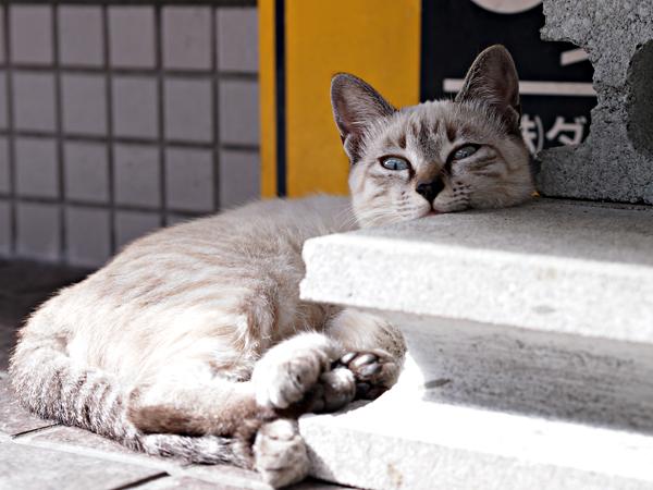 子ネコたち5-3