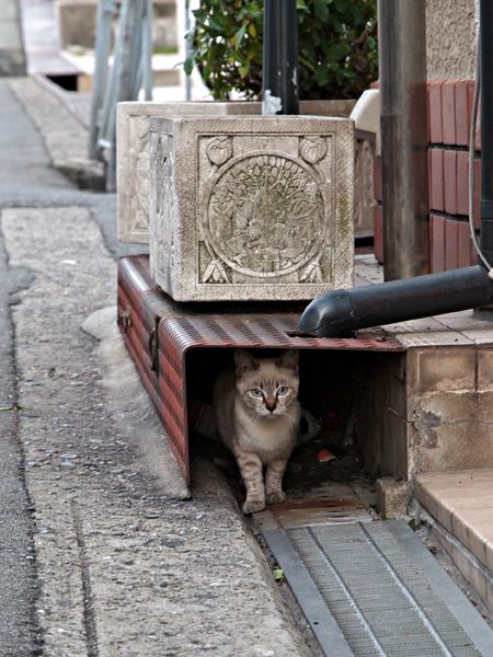 子ネコたち5-2