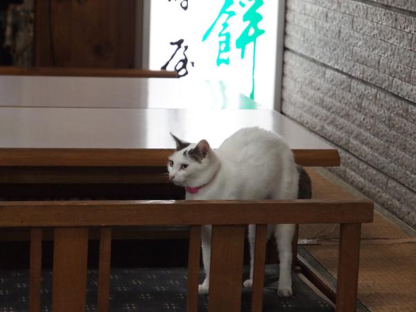 餅猫?タマちゃん