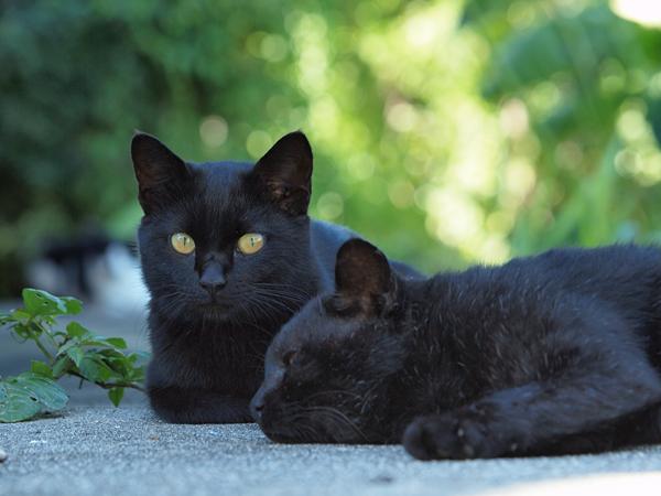 黒ネコきらきら