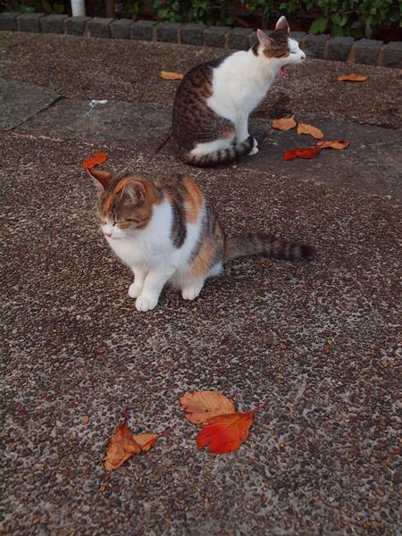 秋色猫色3