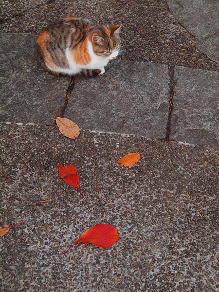 秋色猫色1