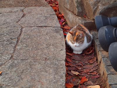 秋色猫色4