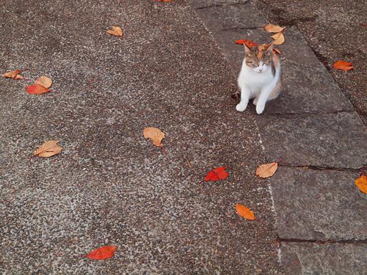 秋色猫色2