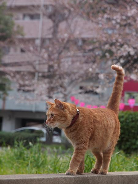gobuzaki_01