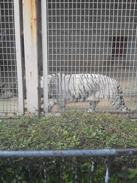大牟田動物園 008