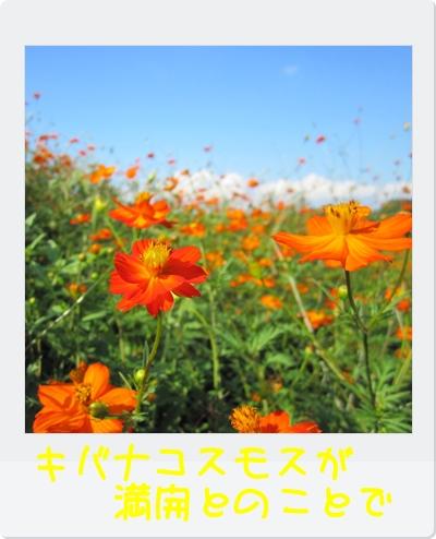 IMG_3450.jpg