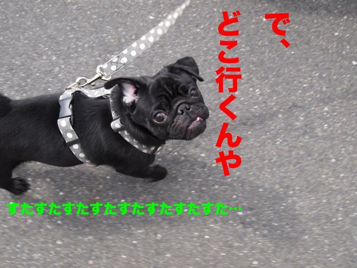 P9302580ブログ_convert_20111107211637