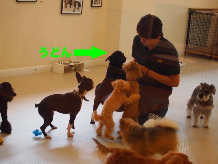 P9302593ブログ_convert_20111107212009