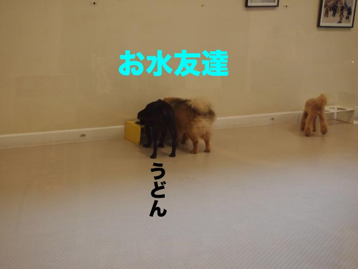 P9302608ブログ_convert_20111107212152