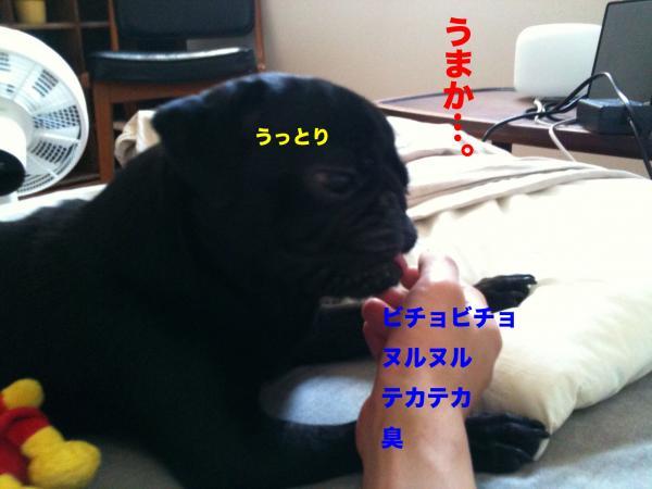 IMG_1890ブログ_convert_20111113201608