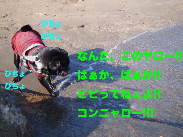 PA292907ブログ_convert_20111123153019