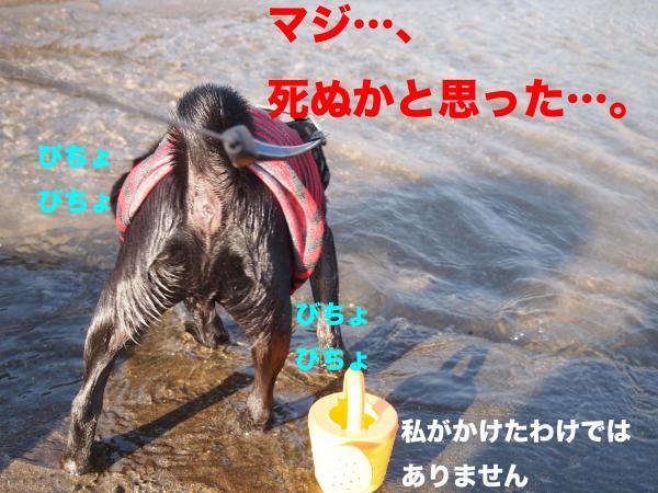 PA292908ブログ_convert_20111123153049