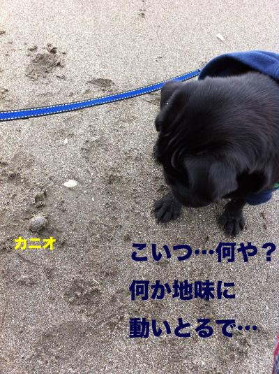 IMG_1138ブログ_convert_20111204230526