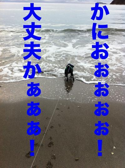 IMG_1142ブログ_convert_20111204230701