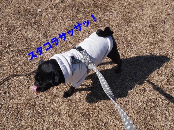 P2124419ブログ_convert_20120213183550