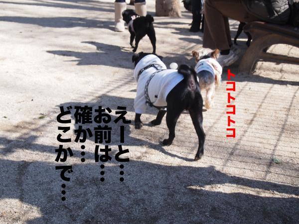 P2124423ブログ_convert_20120213183623
