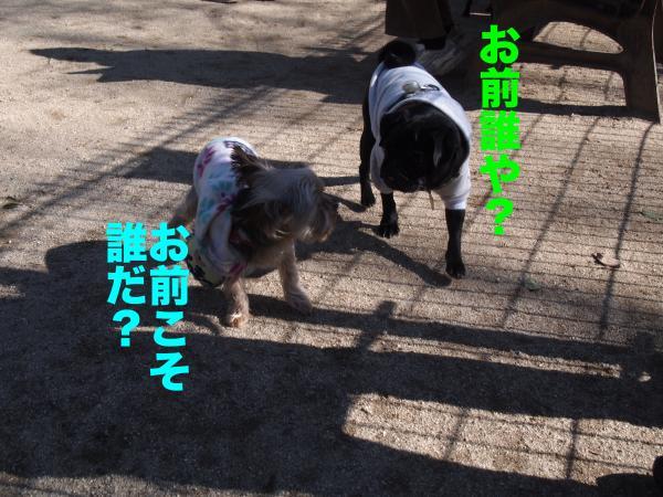 P2124424ブログ_convert_20120213183638