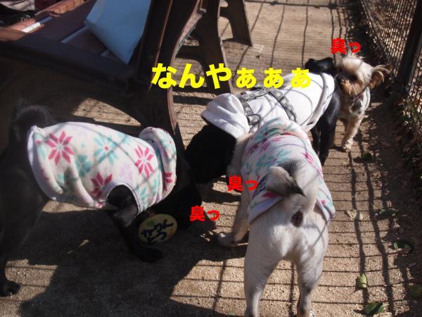 P2124446ブログ_convert_20120213183706