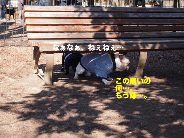 P2194932ブログ_convert_20120302212129