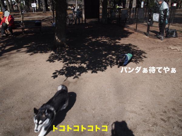 P2194958ブログ_convert_20120303214353
