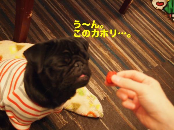 P2215005ブログ_convert_20120308234944