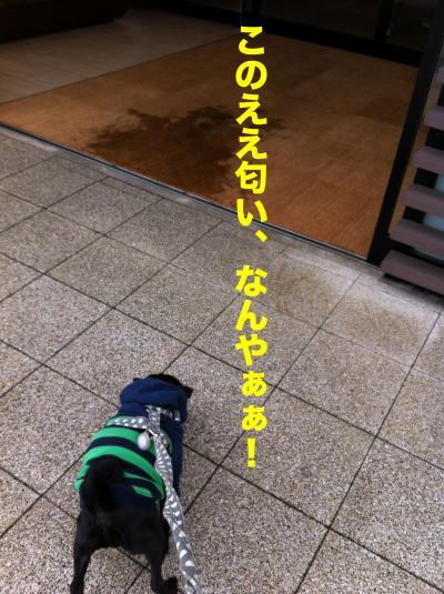 IMG_1529ブログ_convert_20120311202843