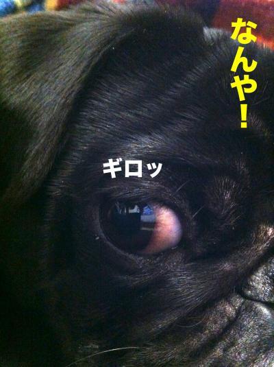 IMG_1566ブログ_convert_20120320204935