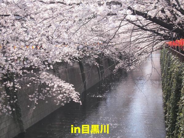P4085544ブログ_convert_20120408234747