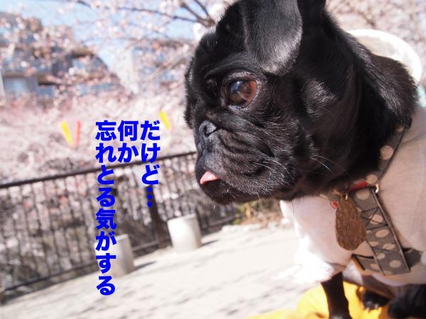P4085587ブログ_convert_20120408234637