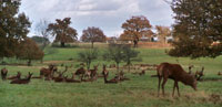 richmond-park-deers.jpg