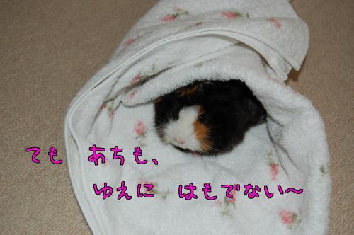 梅お迎え記念日6